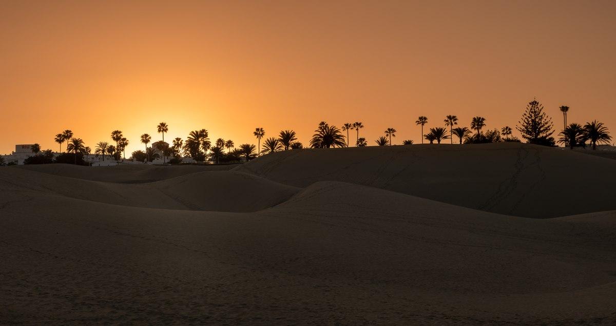 Palmtrees in Maspalomas during sunset